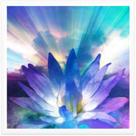 blossom-radiant